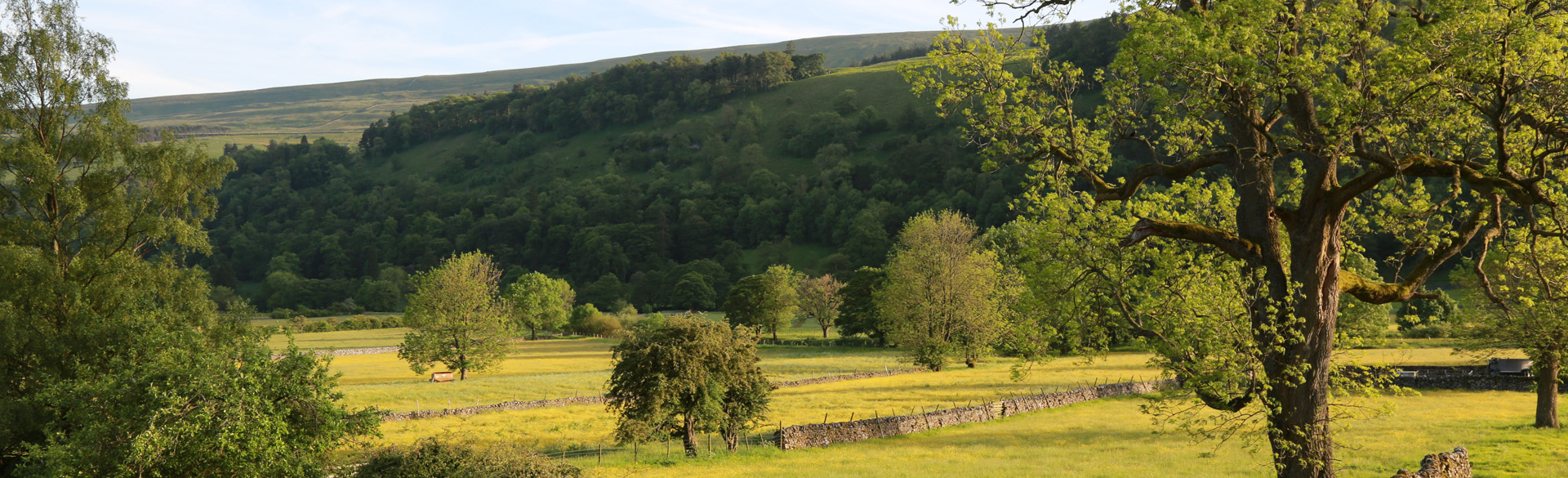 Meadow in early evening